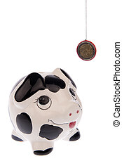 Pig looking up to Euro coin right side