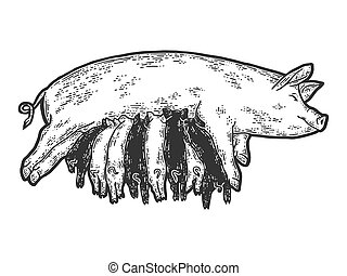Pig mother feeds piglets. Sketch scratch board imitation. ...