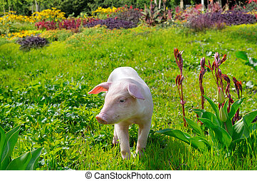 pig on a background of green grass and flowers
