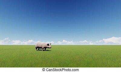 Pig on a green grass field