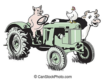 Pig on the tractor