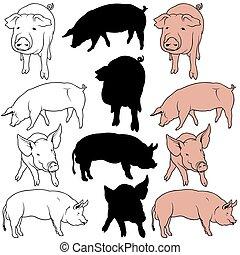 Pig Set 01 - colored hand drawn illustration