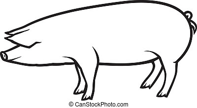 pig vector illustration