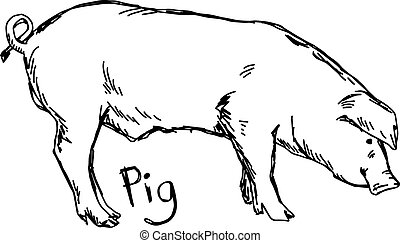 pig - vector illustration sketch hand drawn with black lines, isolated on white background
