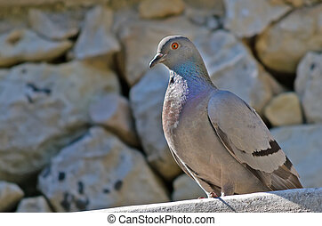 pigeon and wall