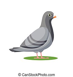 Pigeon bird. vector illustration