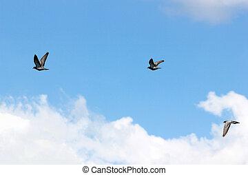 pigeon birds on blue sky