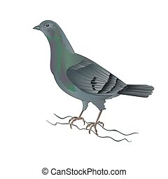 Pigeon breeding dove vector.eps