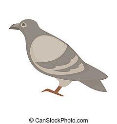 pigeon cartoon bird. Vector isolated