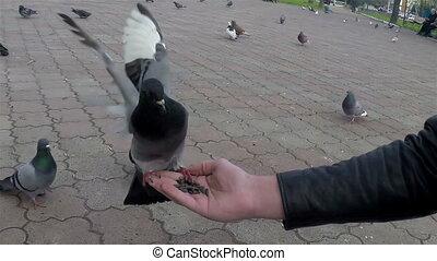 Pigeon close-up 04