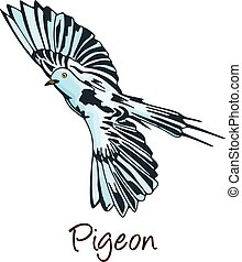 Pigeon, Color Illustration