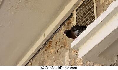 Pigeon House on the cornice