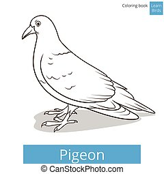 Pigeon learn birds educational game vector illustration