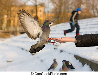 Pigeon on a hand