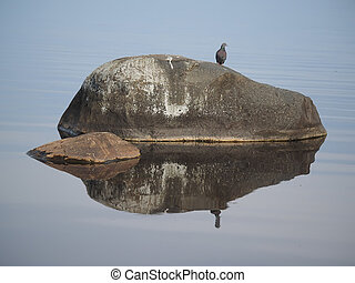 Pigeon on a stone