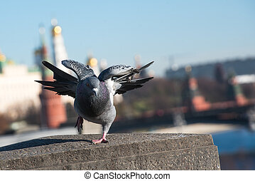 pigeon on background of the city