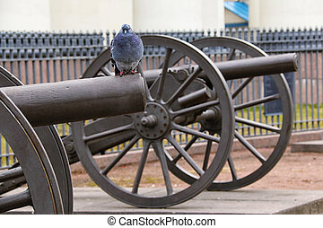 Pigeon on barrel of cannon