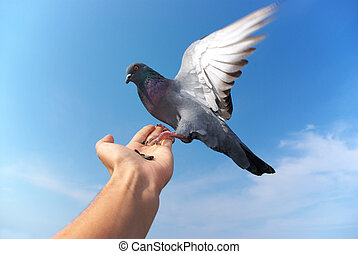 Pigeon on hand. Element of design.