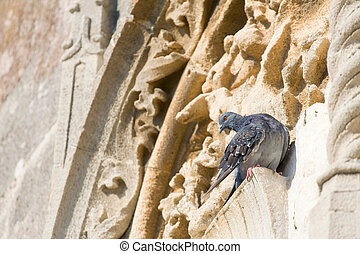 Pigeon on the ancient wall