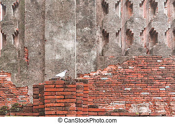 Pigeon on the brick wall, background, animals