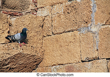 Pigeon on wall in Caesarea Maritima