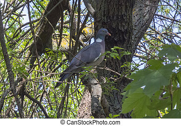 pigeon perched on the branch of a tree