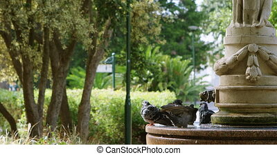Pigeon perching on fountain 4k - Pigeon perching on fountain...