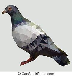 pigeon, polygone