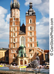 pigeon sitting on a stone wall, in the backround the Main Market Square with St. Mary's Church, Krakow, Poland