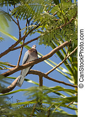 Pigeon sitting on a tree