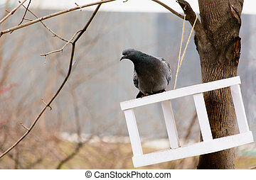 pigeon sitting on the roof of the trough