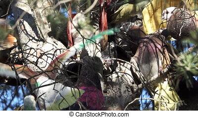 pigeon, sur, arbre, concurrence, colombine
