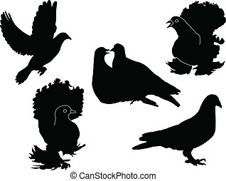 pigeon - vector - illustration of pigeon - vector