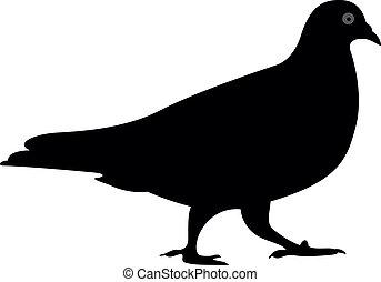 pigeon vector silhouette, vector
