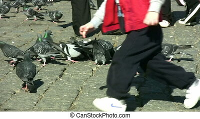 pigeons, 1080p, entiers, hd