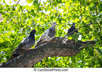 Pigeons are sitting on a tree branch