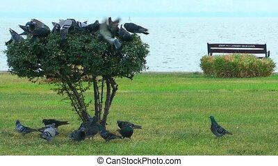 Pigeons Bird Animal