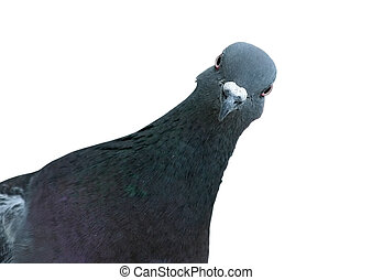 Pigeon's centered look