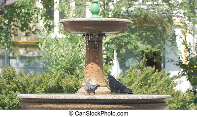 Pigeons drink water from a small fountain