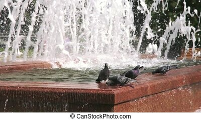 Pigeons drinking water from a fountain and flying around.