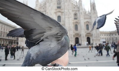 Pigeons eating from hands on the background of the Duomo in Milan
