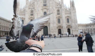 Pigeons eating from hands on the background of the Duomo in...