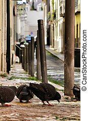 Pigeons eating on a cobblestone street of Lisbon