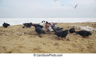 Mouvement Affamé Femme Pigeons Lent Mouettes Sea Surgelé 8qxxCwv