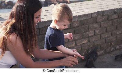 pigeons, fils, maman, nourrit, elle