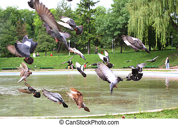Pigeons fly in the park over a small lake