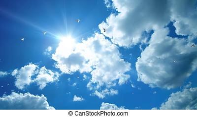 Pigeons flying against beautiful blue sky, 4K