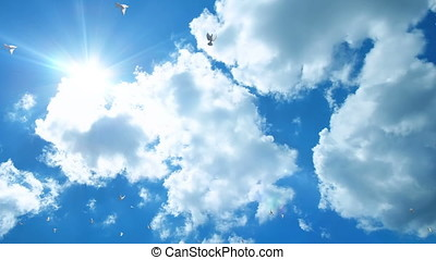 Pigeons flying against beautiful blue sky, panning