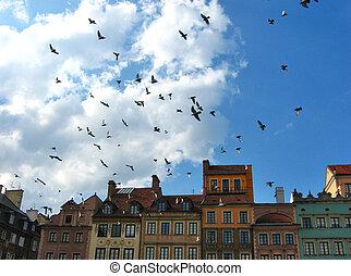 pigeons flying in Warsaw