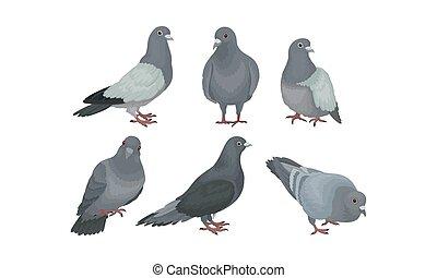 pigeons, illustration, vecteur, mouvement, rocher, ou, colombes, ensemble